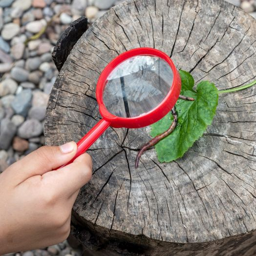 Rex London | Wonders Of Nature Magnifying Glass