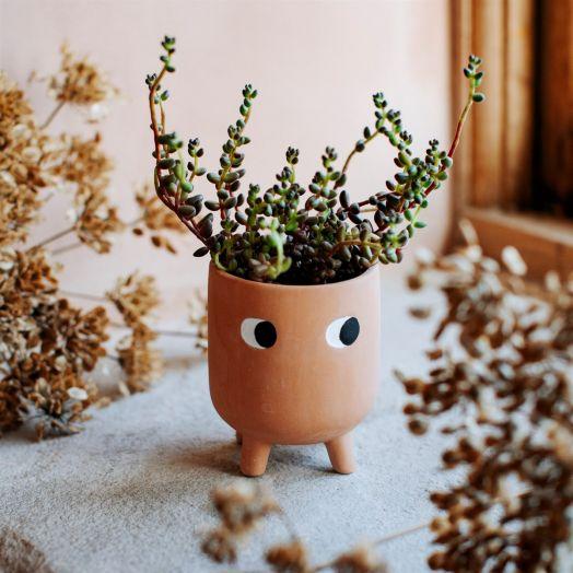 Sass And Belle | Little Leggy Planter